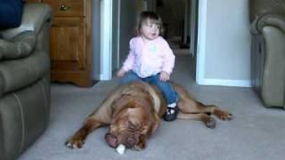 Dogue De Bordeaux  And Baby