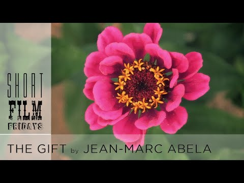 Short Film Friday: The Gift - Presented by Real Food Media Contest