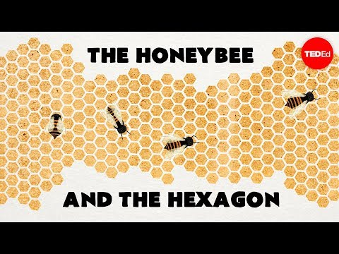 Why do honeybees love hexagons? - Zack Patterson and Andy Peterson