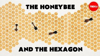 Why do honeybees love hexagons? - Zack Patterson and Andy Peterson thumbnail