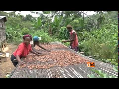 Africa Cocoa Smuggling