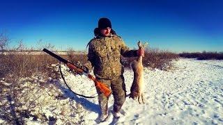 Полювання на зайця. Тропление зайця. ТОЗ-34