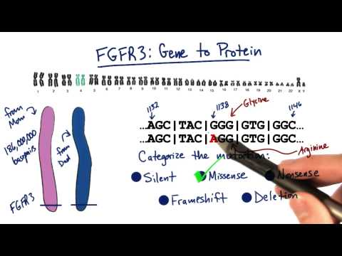 FGFR3 - Tales from the Genome