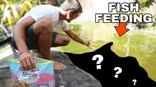 EPIC BACKYARD PREDATORY FISH COLLECTION!!!