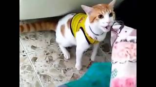"""Футбольный болельщик научил кота кричать """"гол"""""""