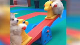 Best Cute and Funny Cats and Dogs  2019 💕 Funny Pet Videos