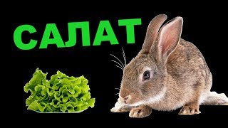 видео Полезная информация: можно ли кроликам клубнику?