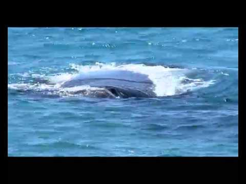 Point Ann Western Australia Southern Right Whale Nursury