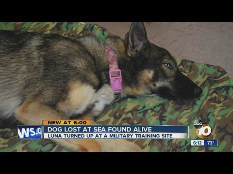 Cyndi & Chris - Dog Found Alive After Being Lost At Sea For 5 Weeks!