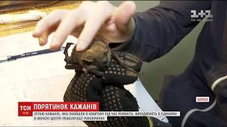 Запорізькі знайди  чотири сотні кажанів доправили до Харкова