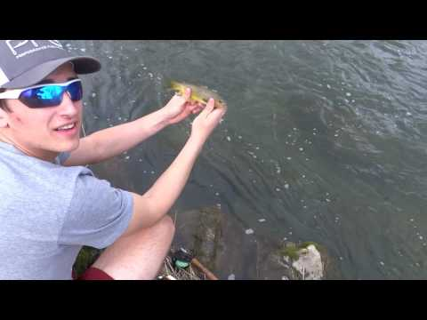 Driftless Area trout fishing trip.