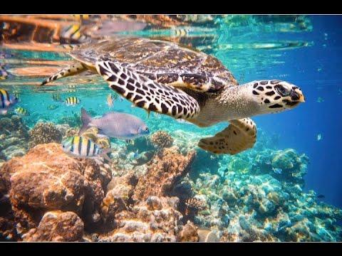 Riviera Maya Tours & Excursions - Snorkel in Akumal & 3 cenotes
