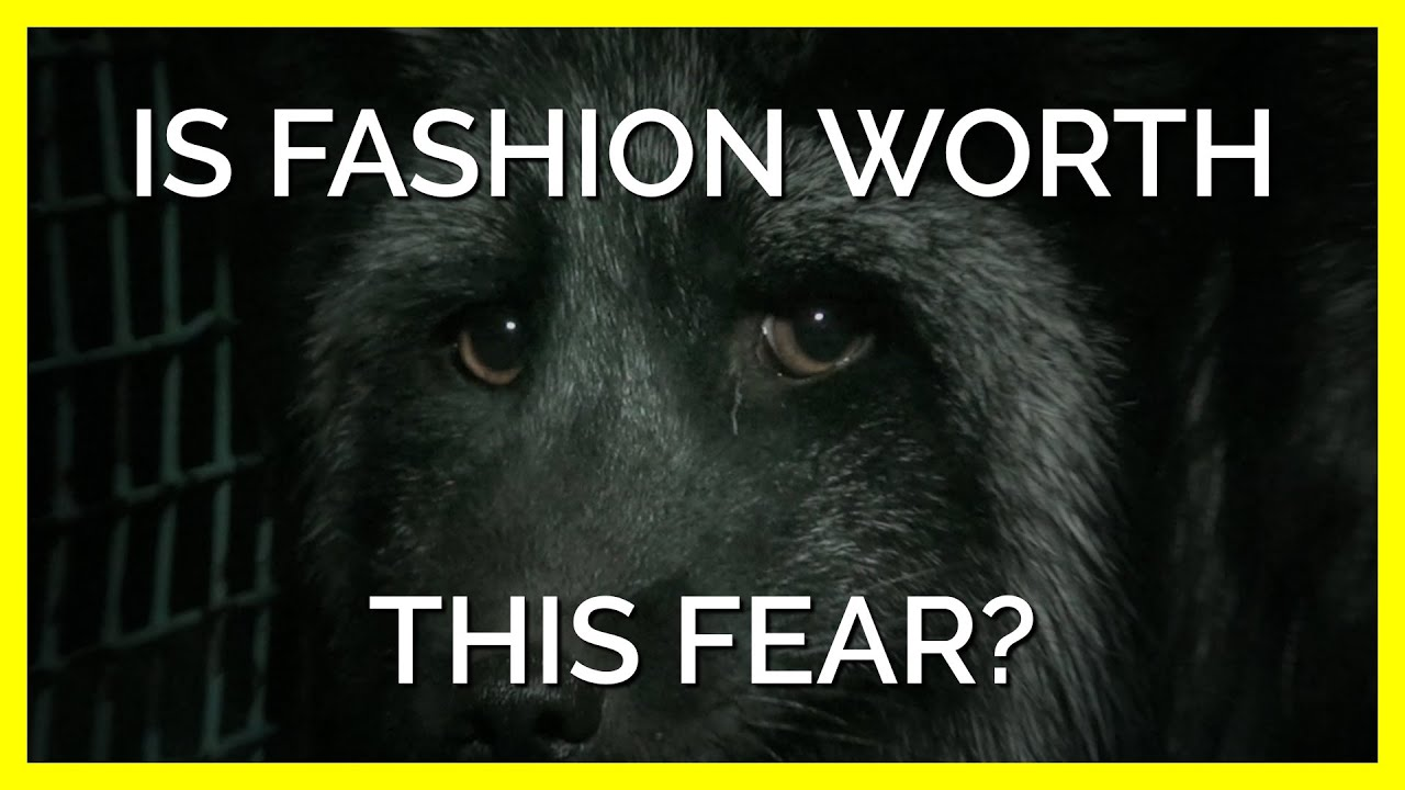 Think of the Animal Behind Your Clothing