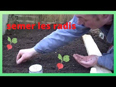 Que faire au jardin en fevrier semer les premiers radis youtube - Que faire au jardin en fevrier ...