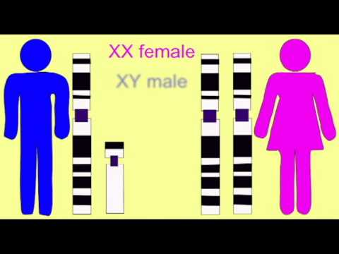 GENETICS 1: SEX LINKAGE: XY CHROMOSOMES AND GENDER