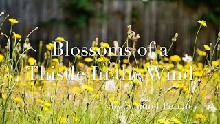 Blossoms of a Thistle In the Wind