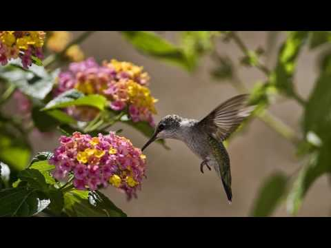 Lorraine Howard - Free To Fly