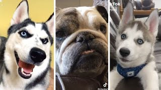 Ultimate Cutest Puppies & Funniest Dogs Compilation [NEW]