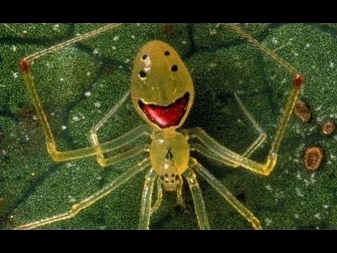 22 Most Bizarre Spider Species
