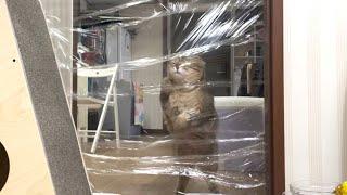 투명벽을 만들었더니 고양이의 반응이?