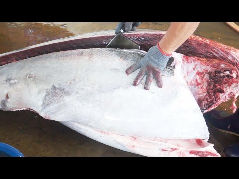 GIANT BLUEFIN TUNA CUTTING SHOW