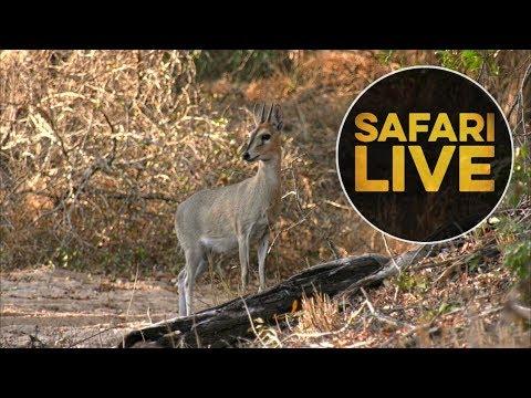 safariLIVE - Sunset Safari - August 11, 2018