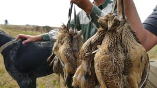 Argentina Hunting - Ducks, Doves, Perdiz and Golden Fish