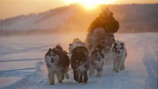Тур на собачьих упряжках. Школа каюра. Якутия. Презентация