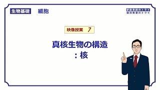 【生物基礎】 細胞7 核 (12分)