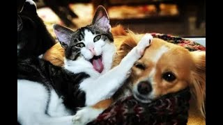 CATS AND DOGS Awesome Friendship  Funny Cat and Dog Vines COMBINATION   2021  6