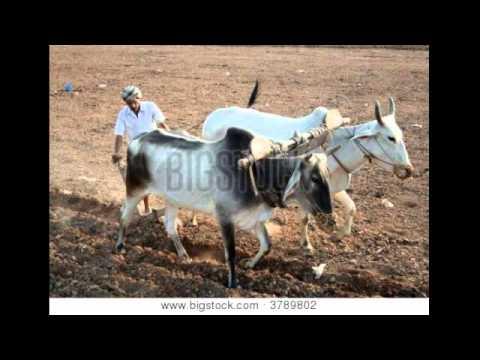 Pagri sambhal jatta (PART --1)