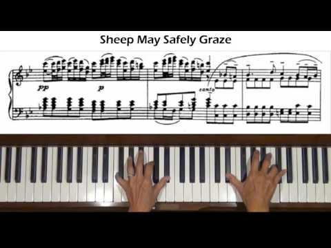 Bach Sheep May Safely Graze (arr.  Petri) Piano Tutorial