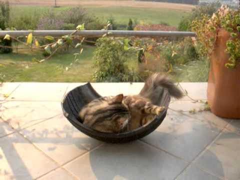 Cama balanc n para gato youtube - Cama para gato ...