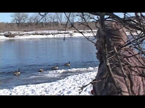 Download Montana River Mallard Hunt - The Fowl Life Season 1 episode 5
