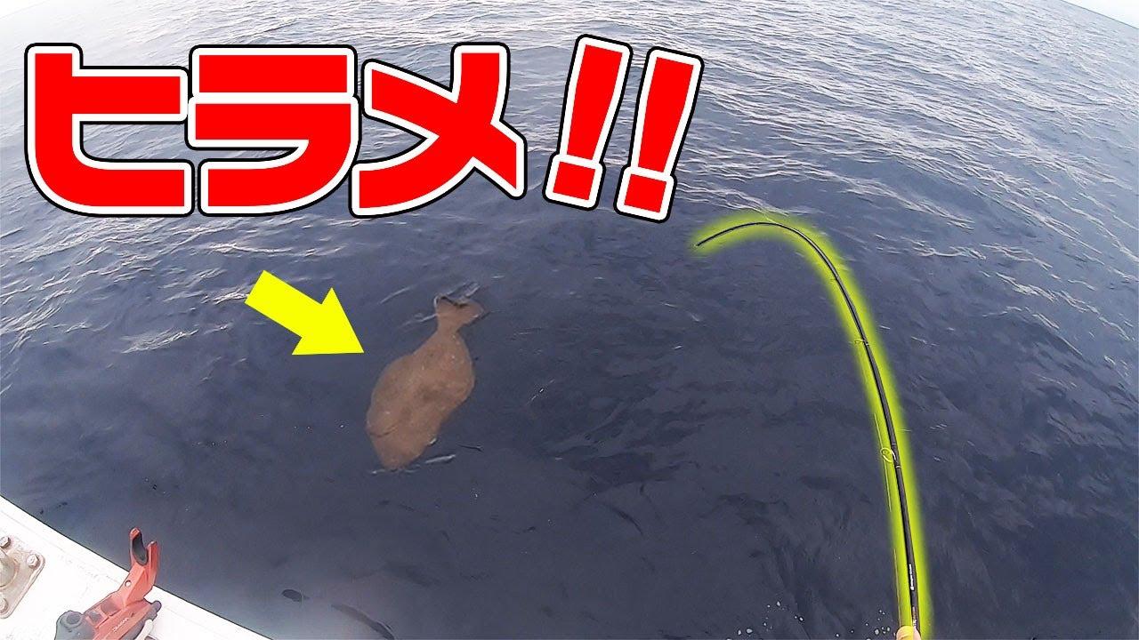 【アジ泳がせ】さらに高級魚連発!