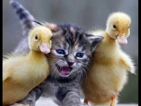 Ilginç Hayvan Resimleri Videoları Youtube