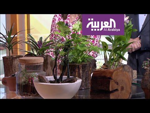 صباح العربية | كيف نختار أحواض النباتات؟  - نشر قبل 23 دقيقة