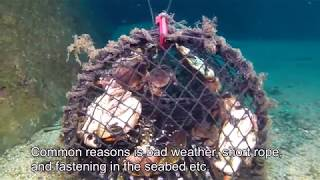 Ghost fishing - lobster pot in Norway