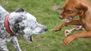 Dog Training #1