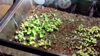 Vegetable Garden 2013 Zone 5 :  Update 1