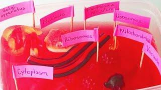 Биология 6 класс. Клетка . Строение клетки . Проект