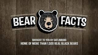 Bear Facts #4
