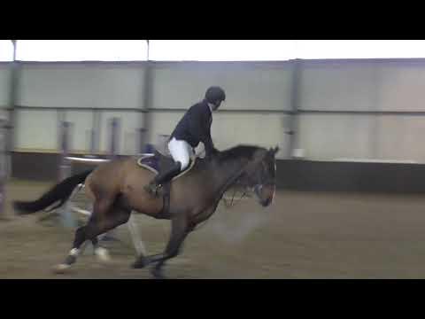 David Coombs & Freddie 55 - Clear - 1.30m - Solihull