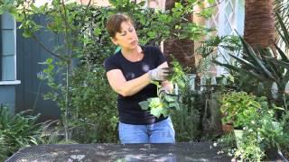 How to Pollinate Indoor Cucumbers : Garden Space