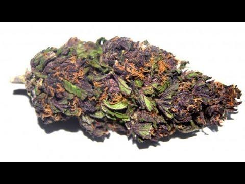 Smoking Weed - Marijuana - Cannabis - Drug Free (NECRO)