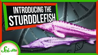 This Sturgeon-Paddlefish Hybrid Shouldn't Exist | SciShow News
