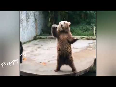 kungfu-dog😂funny-and-cute-puppies-compilation