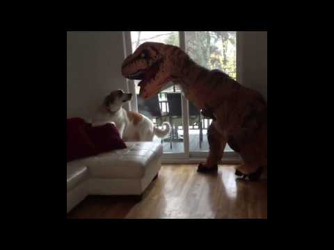 Dog scared by dinosaur costume