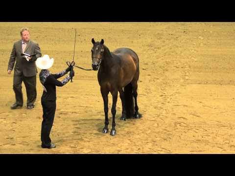 Laura Smith Win Championship for Showmanship at R8 Arabian Horse Competition