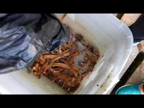 How To Clean Bones - Trash Bag Decomposition - Maceration Alternative - Taxidermy - Oddities